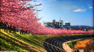 sky landscape trees pink path cherry blossom japan