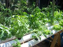 Hydroponics Vegetable Gardening by Http Www Hydroponics Simplified Com Hydroponic Growing Medium