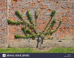 peach tree stock photos u0026 peach tree stock images alamy