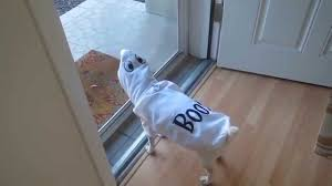 silly dog wearing his ghost costume for halloween youtube