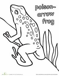 poison arrow frog coloring worksheets frogs arrow