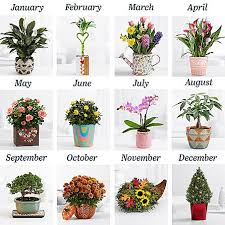 plant of the month club best floral fresh flower subscription services and boxes my