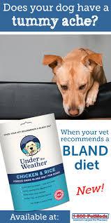 feeding a boxer dog best 25 bland diet for dogs ideas on pinterest dog upset