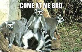Lemur Meme - come at me bro lemur memes quickmeme