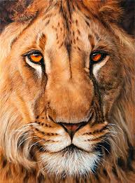 lion print lion limited edition print available now canvas and fine art