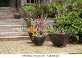 planters stock images royalty free images u0026 vectors shutterstock