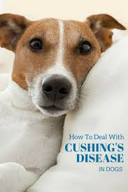 Candida And Hair Loss Top 25 Best Hair Loss In Dogs Ideas On Pinterest Dog Hair Loss