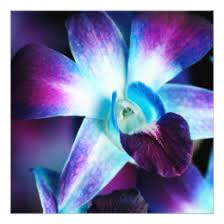 blue dendrobium orchids dendrobium orchid invitations announcements zazzle