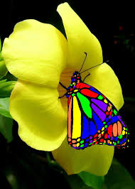 rainbow butterflies rainbow butterfly by madappy the