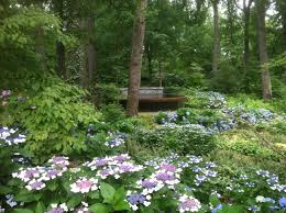 Atlanta Botanical Gardens Membership Perkins Will Selected To Design Botanical Gardens Waterfront