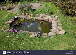 native uk pond plants aquatic pond plants stock photos u0026 aquatic pond plants stock