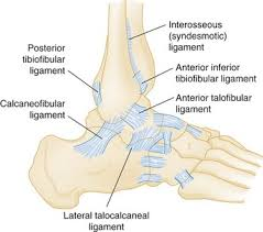 Anterior Distal Tibiofibular Ligament Ankle And Foot Anesthesia Key