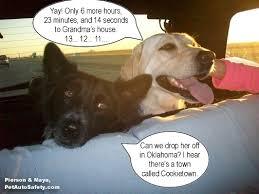 Dog In Car Meme - dog car harnesses american dog blog