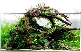 Aquarium Decoration Ideas Freshwater Aquarium Decoration Ideas Archives Aquariadise