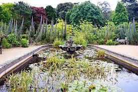 Ventnor Botanic Gardens And Fish Pond Picture Of Ventnor Botanic Garden Ventnor