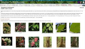 Tropical Rainforest Plant List - rainforest plants of australia u2013 interactive identification key