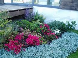 imagenes de jardines pequeños con flores plantas para jardines secos flores para jardines pequeños berryd com