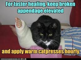 Injury Meme - lolcats injured lol at funny cat memes funny cat pictures