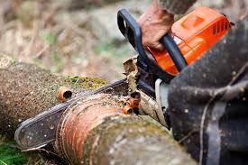 david s tree service tree services david s tree service