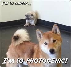 Depressed Pug Meme - pug anonamos3021