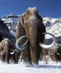 woolly mammoth hunted homo sapiens