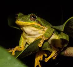 treefrog hashtag on twitter