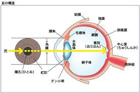 The Blind Spot In The Eye Is Due To Vision U2013 Ap Psychology Community