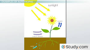 Types Meaning Autotrophs Definition Examples U0026 Types Video U0026 Lesson