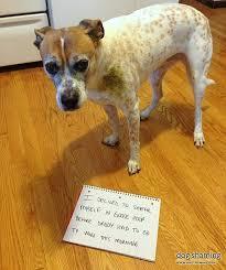 Dog Shaming Meme - dog shaming father s day edition album on imgur