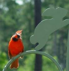 Nc Backyard Birds Jacksonville North Carolina Wild Bird Pictures Backyard Birds