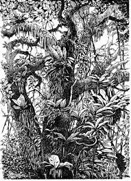plein air pen and ink drawings u2013 drawing the motmot
