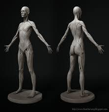 Human Anatomy Reference 241 Best Anatomy U0026 3d Human Body Images On Pinterest Anatomy
