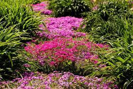backyard flower gardens backyard garden lover
