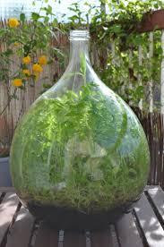 dame jeanne deco 1143 best terrarium u0026 moss u0026 small gardens images on pinterest