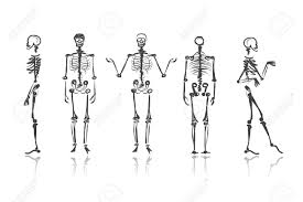 Skeleton Halloween by Skeleton Sketches For Your Design Royalty Free Cliparts Vectors