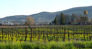 sonoma country strong daily brilliant