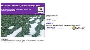 wheat freeze damage ksugrains