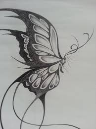 pencil sketches of butterflies on flowers original design of a