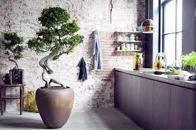 plante cuisine decoration rue plante cuisine photos de design d intérieur et décoration de