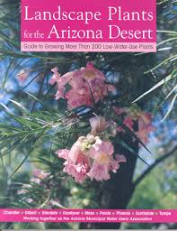 plants native to arizona desert plants are great at multi tasking water use it wisely