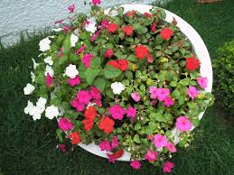 container gardening container gardening for beginners