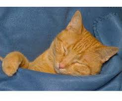 Remove Cat Urine From Sofa How To Clean Urine From Memory Foam