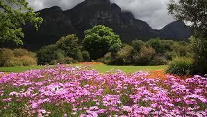 beautiful flowers in kirstenbosch national botanical garden cape