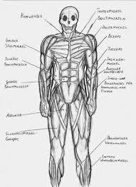 blank fill in the blank muscle diagram