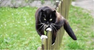 Keep Cats In Backyard Cat Fence Products