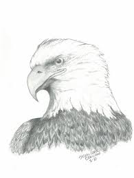bald eagle drawings page 2 of 10 fine art america