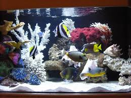 types of saltwater aquariums the aquarium setup filtration and