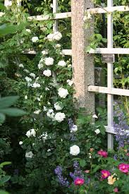 our garden journal a celebration of roses