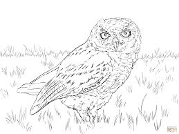 western screech owl coloring page free printable coloring pages