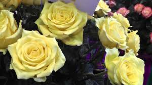 wedding flowers bulk fresh cut fresh bulk roses from wedding